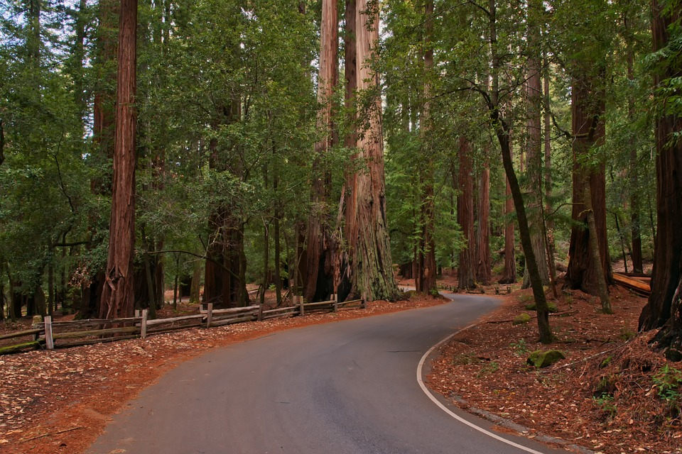 redwood twisty california motorcycle ride